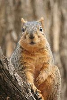 a picture of a squirrel